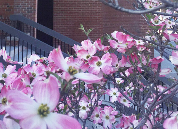 Worship Celebration, Easter Sunday of Easter, April 19, 2020