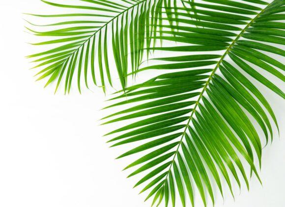 Worship Celebration, Sunday, April 5, 2020 – Palm Sunday